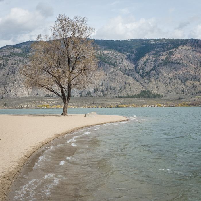 tree-osoyoos-lake