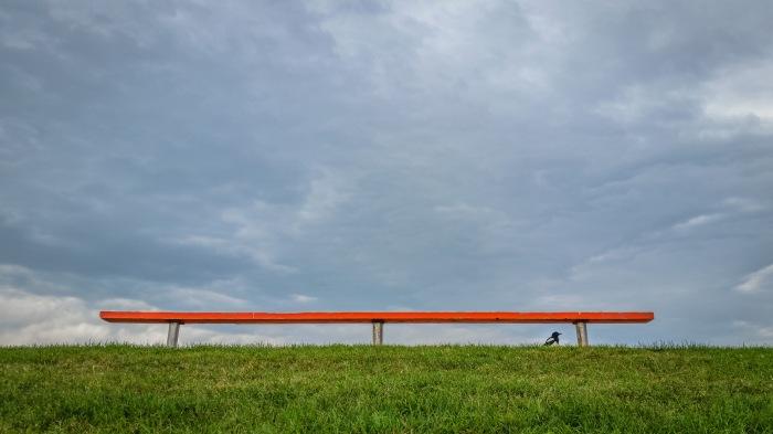 magpie-under-bench