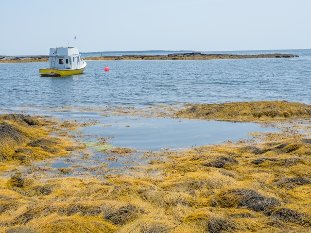 yellow-sea-grass-blue-rocks-nova-scotia