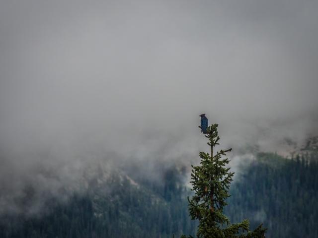 kingfisher-mount-stephen