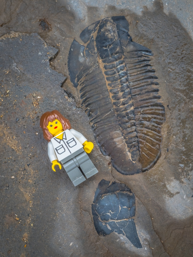 mount-stephen-trilobite-fossil-lego-minifig-for-scale