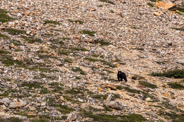 black-bear-nachvak-fjord