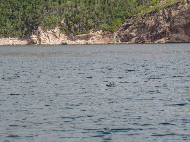seal-in-Aviron-Bay